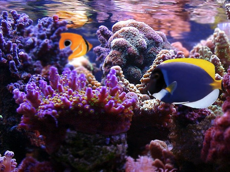 Aquarium Maintenance Service by Dallas Aquarium Experts