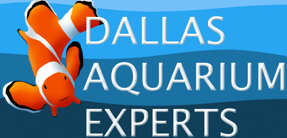 aquarium technician, aquarium service technician, aquarist job openings, aquarium technician jobs, aquarium maintenance technician, dallas aquarium experts, north texas aquarium, aquarium service