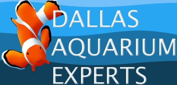 aquarium technician, aquarium service technician, aquarist job openings, aquarium technician jobs, aquarium maintenance technician, dallas aquarium experts, north texas aquarium, aquarium service