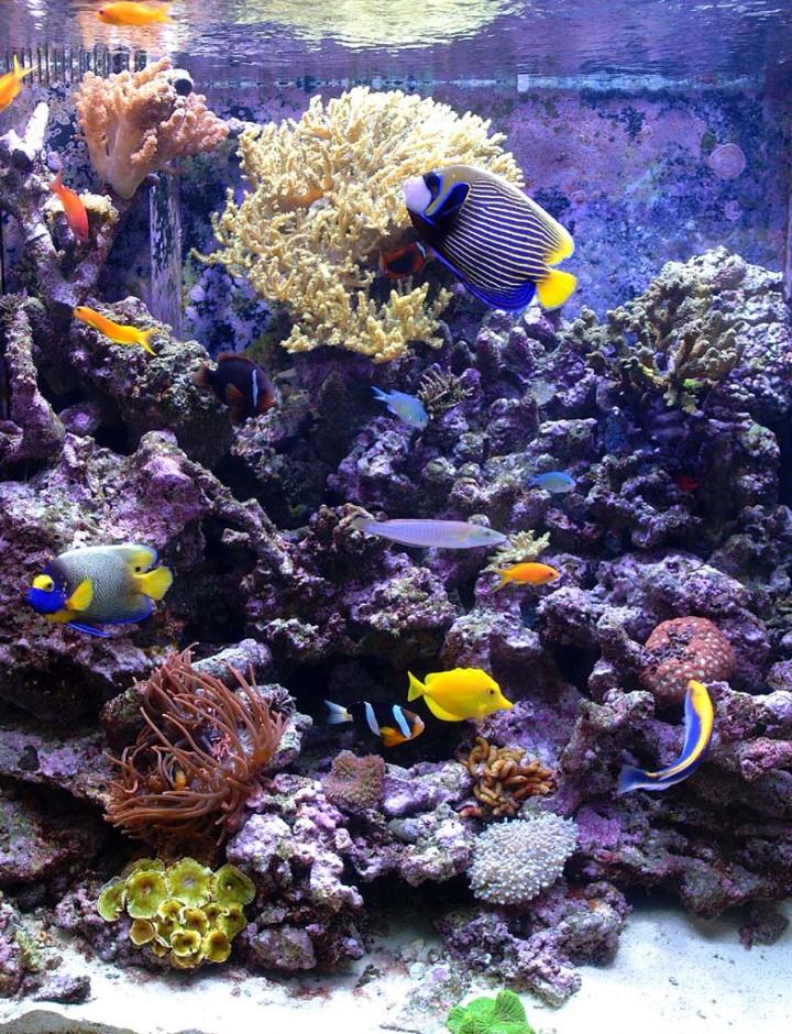 Dallas Aquarium Experts is a full service saltwater aquarium and reef tank maintenance company.