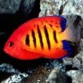 saltwater aquarium maintenance service