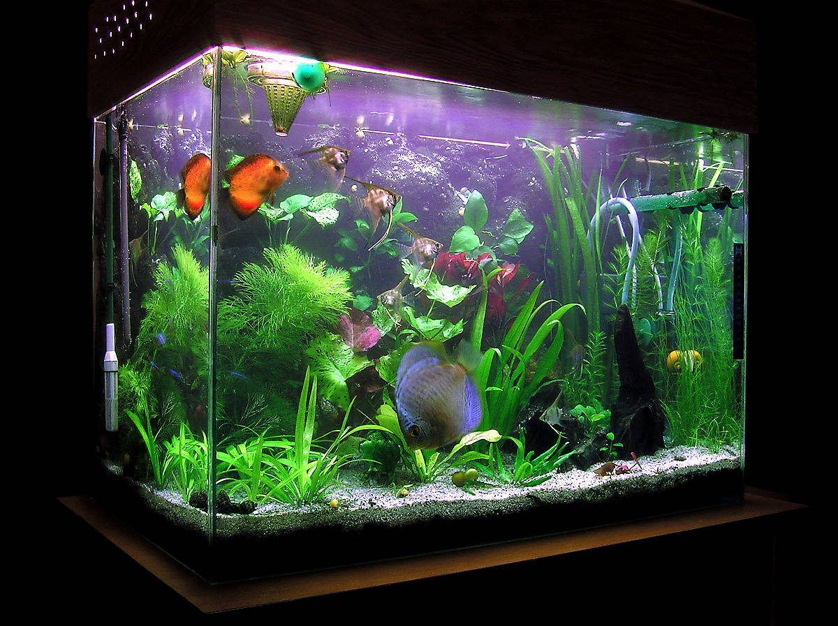 Benefits of an Aquarium & Aquarium Service | DALLAS AQUARIUM EXPERTS