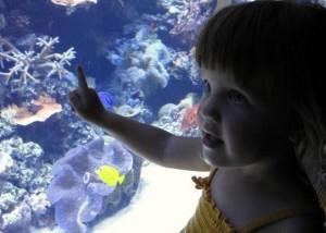 Dallas Aquarium Experts