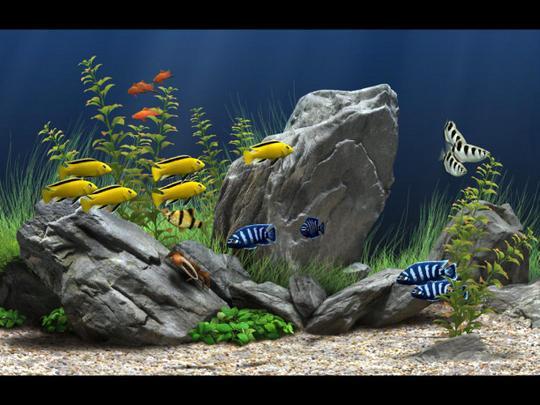 Aquarium Leasing, Aquarium Service, Aquarium Maintenance