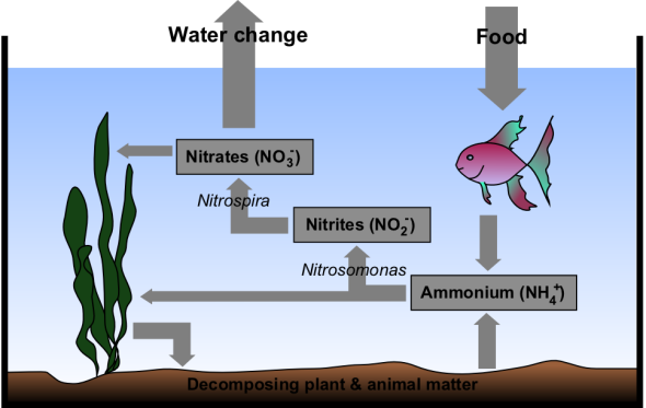 Bacterial blooms and cloudy aquarium water dallas for Bacterial bloom fish tank