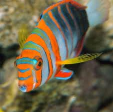 Aquarium Service, Aquarium Maintenance, Fish Tank Cleaning Service, Fish Tank Service, Saltwater Aquarium Service, Saltwater Aquarium Maintenance Service, Saltwater Fish Tank Maintenance, Saltwater Aquarium Maintenance, reef tank service, reef tank maintenance