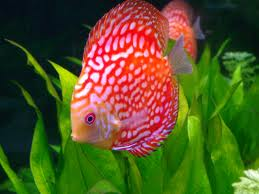 aquarium technician, aquarium service technician, aquarist job openings, aquarium technician jobs, aquarium maintenance technician, aquarium service technician jobs, aquarium specialist