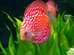 aquarium technician, aquarium service technician, aquarist job openings, aquarium technician jobs, aquarium maintenance technician, aquarium service technician jobs, aquarium specialist