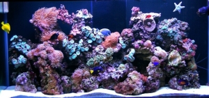 Aquarium Service