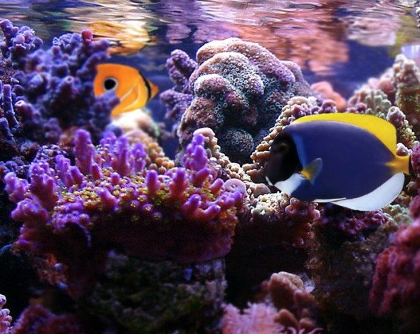 saltwater tank maintenance, saltwater aquarium maintenance near me, saltwater aquarium water change, saltwater aquarium service