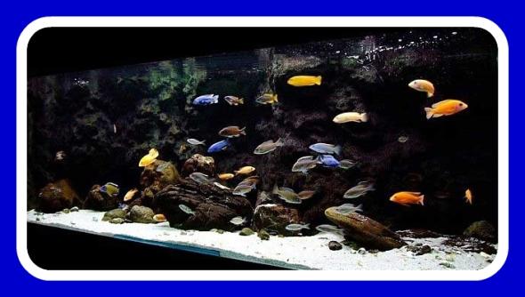 Dallas Aquarium Experts Frequently Asked Aquarium Maintenance