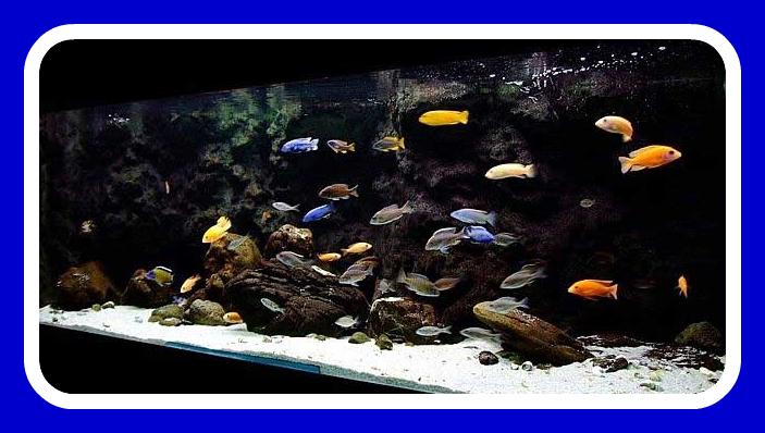 Aquarium Leasing, aquarium rental, fish tank lease, aquarium lease, aquarium service, aquarium maintenance