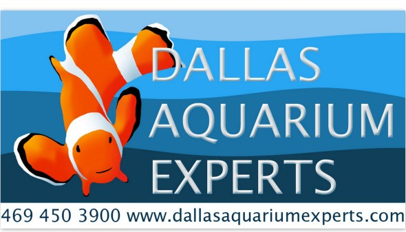 lease aquarium, aquarium leasing, fish tank rental, fish tank leasing, aquarium rental, dallas aquarium experts, aquarium service