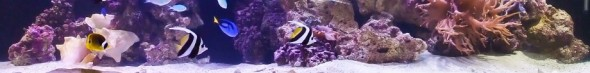 cropped-saltwater-aquarium-by-motoatclub4ag.jpg