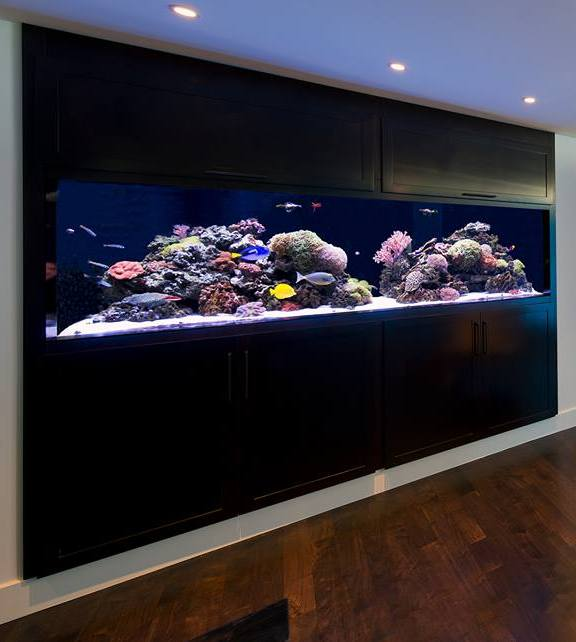 Aquarium maintenance dallas aquarium experts for How to keep fish tank clean without changing water