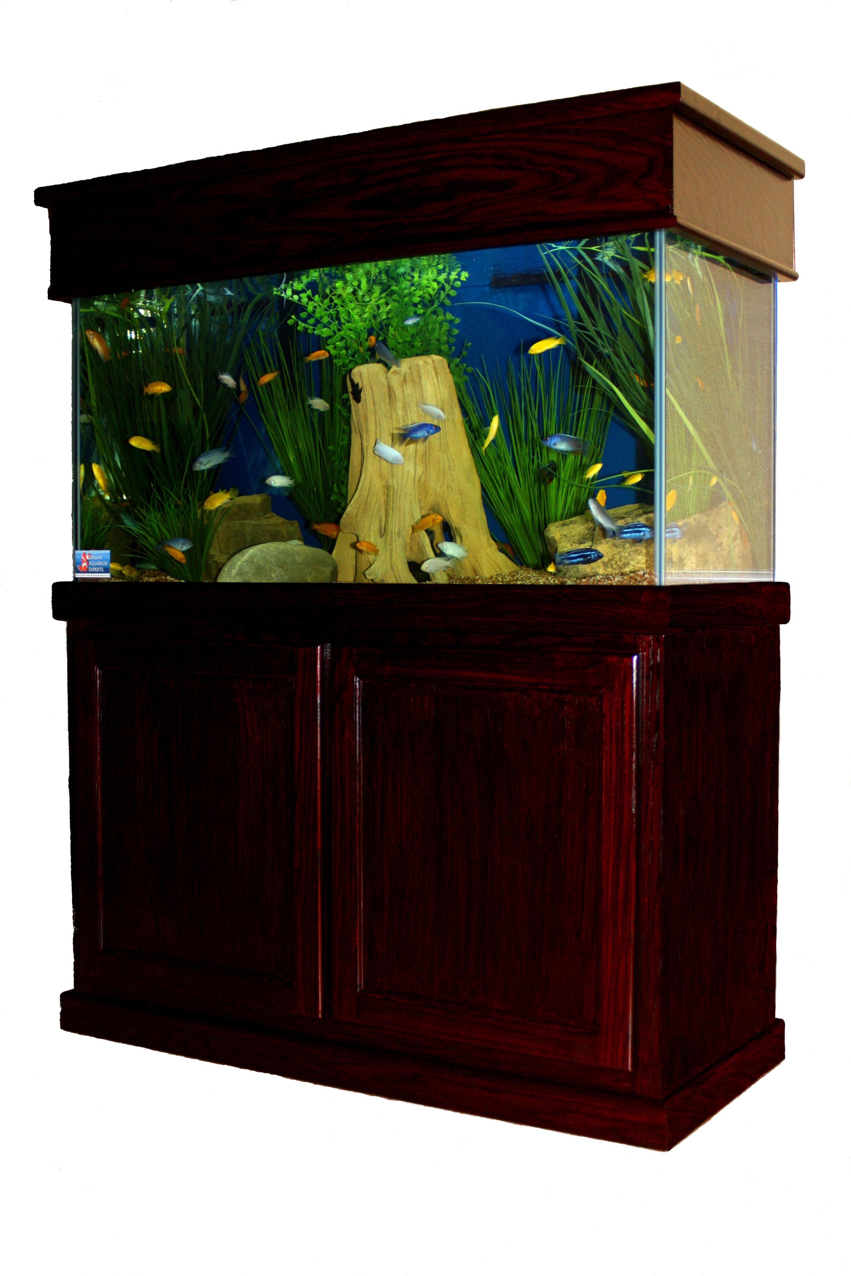 Freshwater aquarium fish dallas - Lease Aquarium