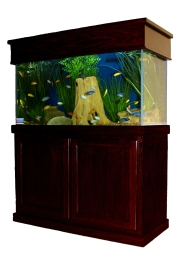 Dallas Aquarium Experts,Fish Tank Lease, Aquarium Leasing, Aquarium Service, Aquarium Maintenance, Aquarium Rental