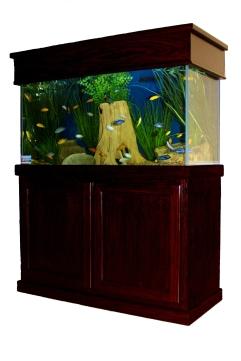 Aquarium Service Company, Dallas Aquarium Experts,Fish Tank Lease, Aquarium Leasing, Aquarium Service, Aquarium Maintenance, Aquarium Rental, Dallas Aquarium Experts