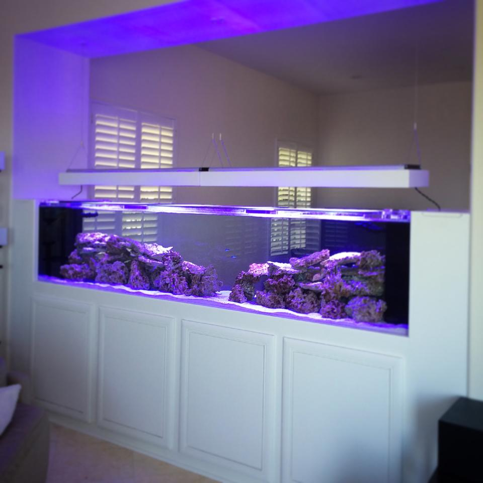 Plano aquarium maintenance by dallas aquarium experts for Fish tank built into wall