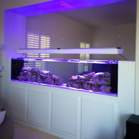 wall divider aquarium