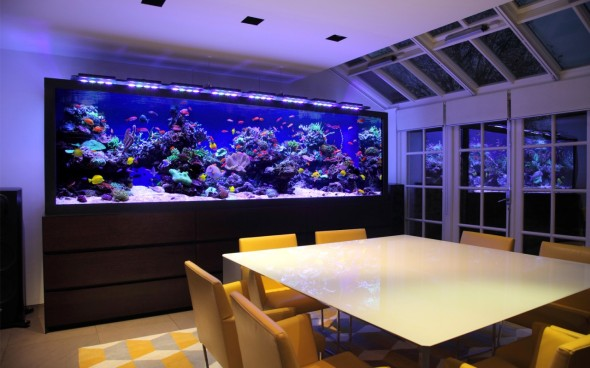 Aquarium Service, Aquarium Maintenance, Fish Tank Cleaning Service, Fish Tank Service, Saltwater Aquarium Service, Saltwater Aquarium Maintenance Service, Saltwater Fish Tank Maintenance, Saltwater Aquarium Maintenance, Aquarium Leasing