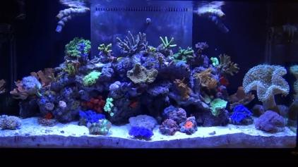 Aquarium Maintenace Sevice Company