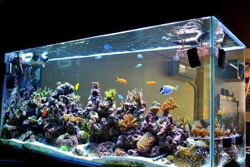 Aquarium Service, Aquarium Maintenance, Fish Tank Cleaning Service, Fish Tank Service, Saltwater Aquarium Service, Saltwater Aquarium Maintenance Service, Saltwater Fish Tank Maintenance, Saltwater Aquarium Maintenance