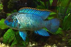 lease aquarium, aquarium leasing, fish tank rental, fish tank leasing, aquarium rental, dallas aquarium experts, aquarium service
