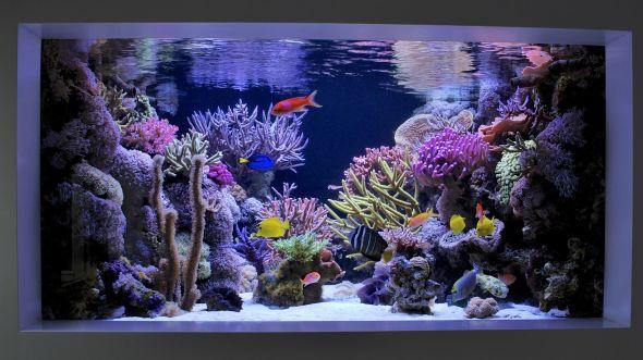 dallas aquarium experts aquarium service aquarium leasing