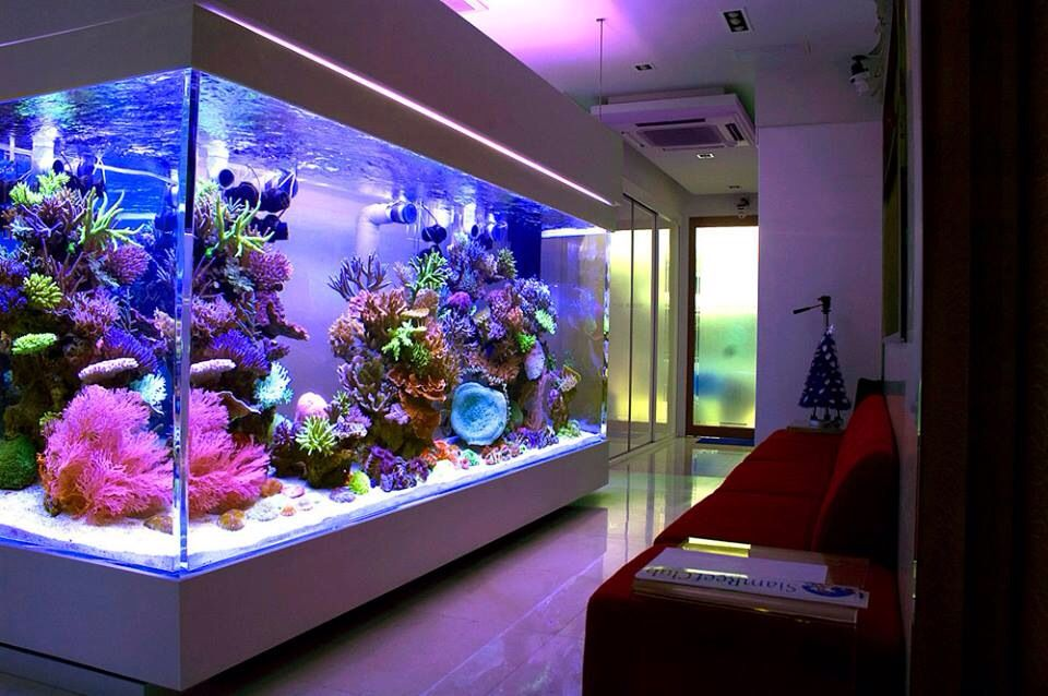 Aquarium Service, Aquarium Maintenance, Fish Tank Cleaning Service, Fish Tank Service, Saltwater Aquarium Service, Saltwater Aquarium Maintenance Service, Saltwater Fish Tank Maintenance, Saltwater Aquarium Maintenance, Aquarium Maintenance Service, lease aquarium