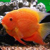 aquarium leasing, Aquarium Lease, fish tank lease, fish tank rental, aquarium rental, aquarium service, aquarium maintenance service, leasing an aquarium, fish tank cleaning service
