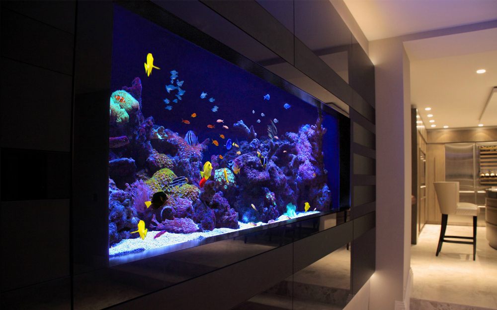 A saltwater aquarium full of healthy fish that is a saltwater maintenance service client of Dallas Aquarium Experts