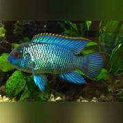 Aquarium Lease, fish tank lease, fish tank rental, aquarium rental, aquarium service, aquarium maintenance service, leasing an aquarium, fish tank cleaning service