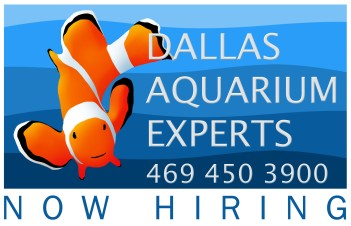 aquarium technician, aquarium service technician, aquarist job openings, aquarium technician jobs, aquarium maintenance technician, dallas aquarium experts, north texas aquarium, aquarium specialist