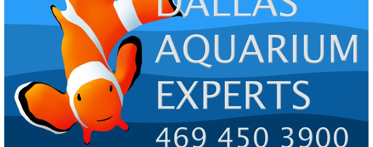 aquarium technician, aquarium service technician, aquarist job openings, aquarium technician jobs, aquarium maintenance technician, dallas aquarium experts, north texas aquarium, aquarium specialist