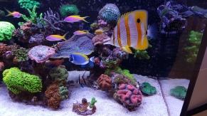 Saltwater Aquarium Service, Saltwater Aquarium Maintenance Service, Saltwater Fish Tank Maintenance Service, Reef Tank service, Reef Aquarium Service, Reef Tank Maintenance Service, Reef Aquarium Maintenance Service