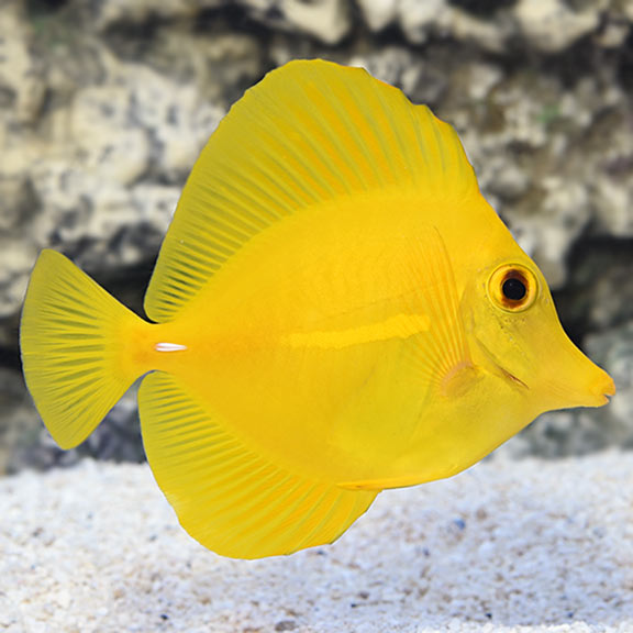 Dallas Aquarium Experts Saltwater Aquarium and Reef Tank