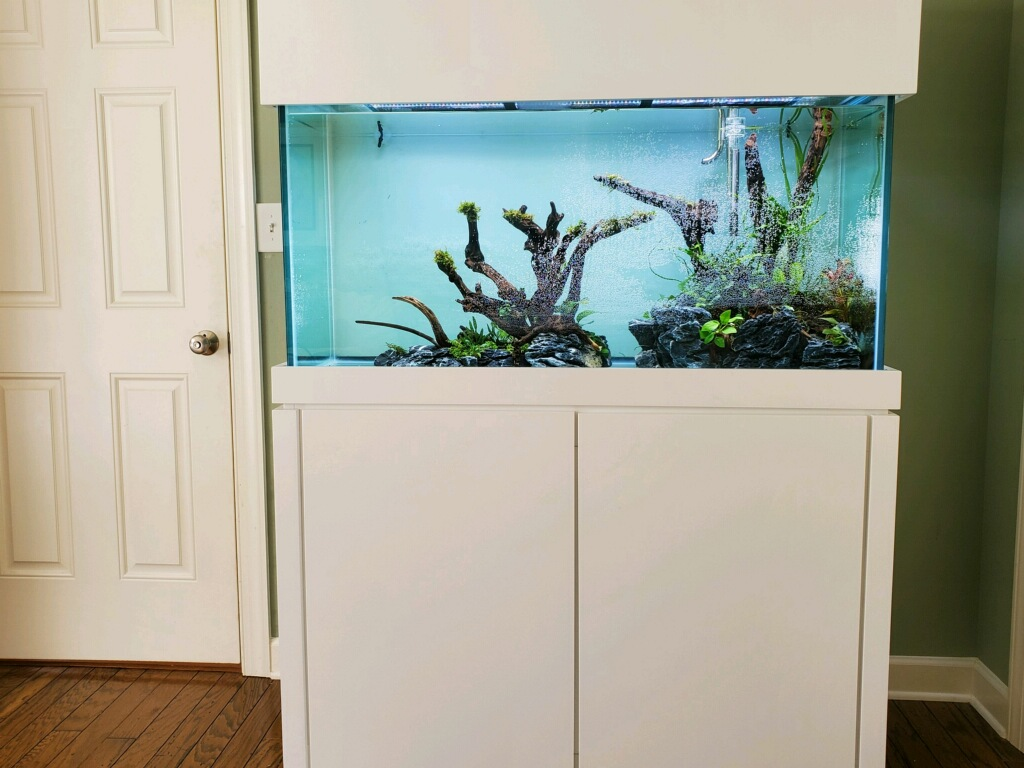 Dallas Aquarium Experts Customers recently set up aquarium