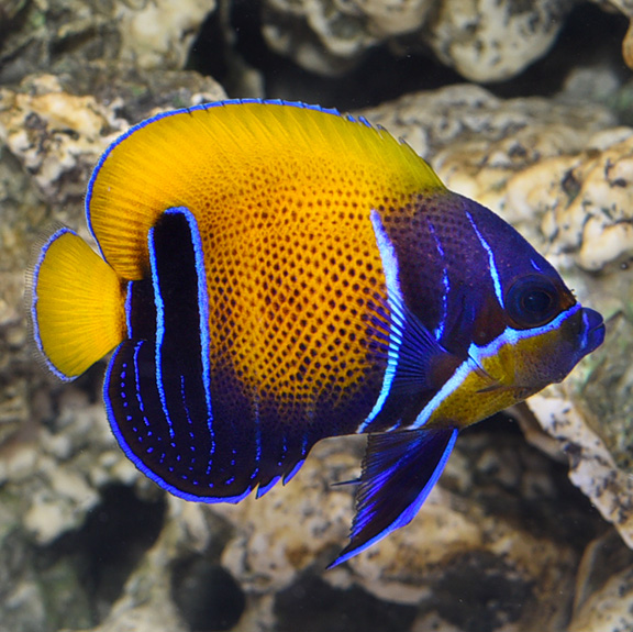 Dallas Aquarium Experts – Certified Fish and Corals for our Aquarium Maintenance Service Clients