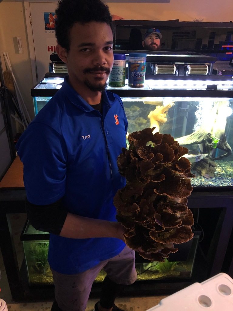 Dallas Aquarium Experts - Aquarium Service Technician performing aquarium maintenance service.